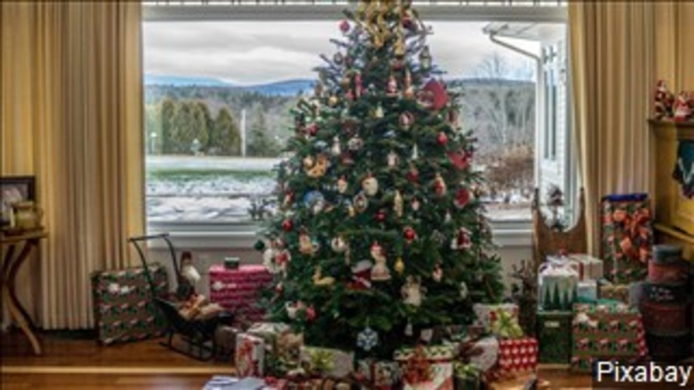 Where Did Christmas Trees Originate.Shasta College Announces Opening Date For Christmas Tree